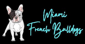 Miami French Bulldogs